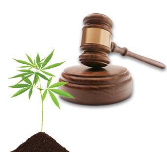 legislazione canapa sativa
